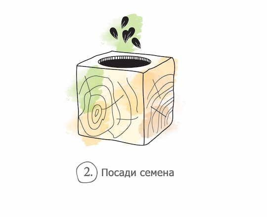 2 семена_а.jpg