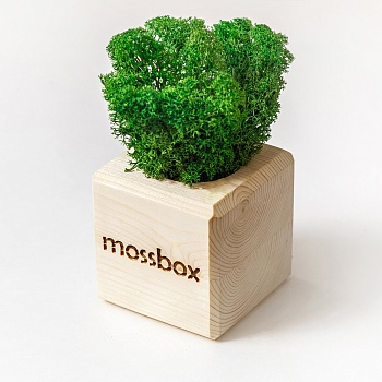 MossBox Wooden Green Cube